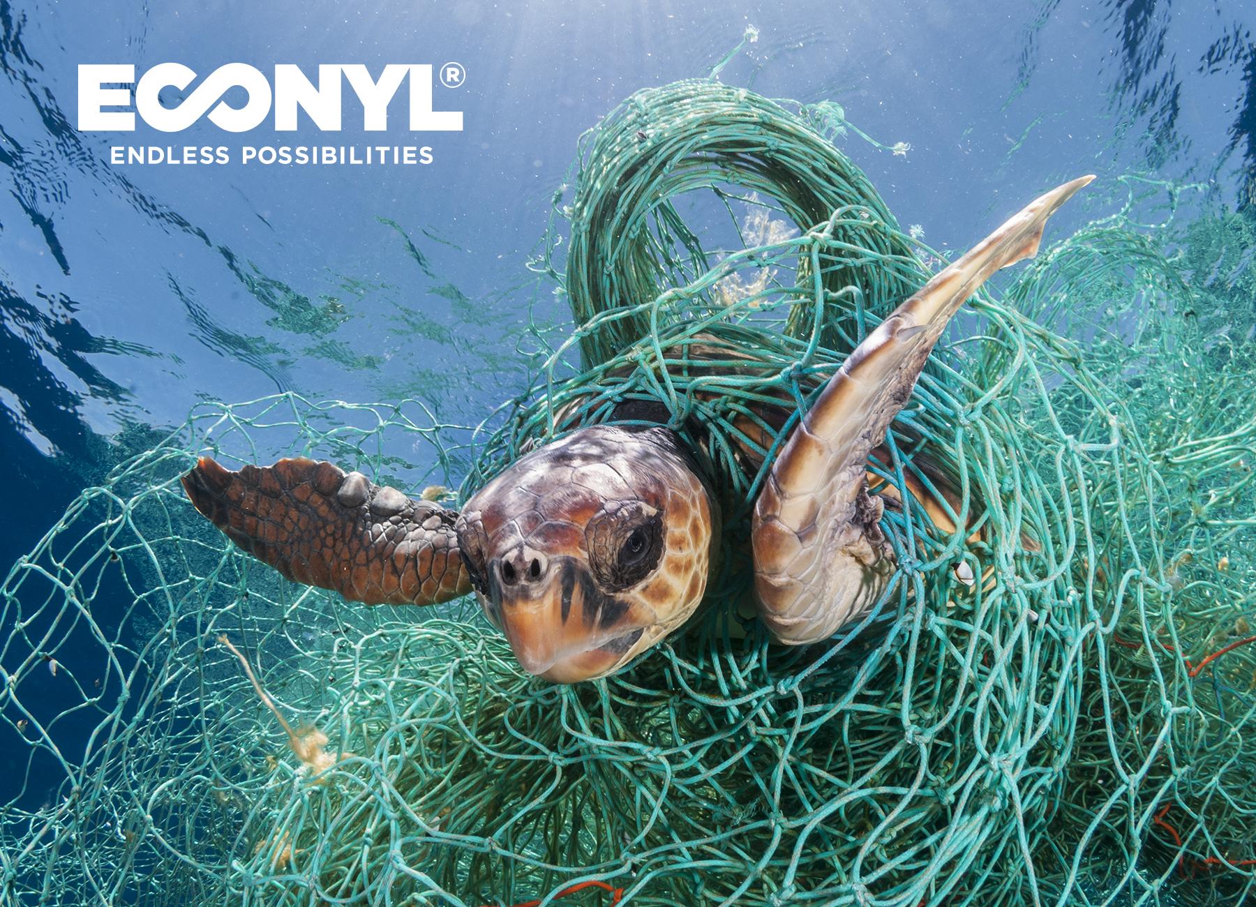 econyl turtle web